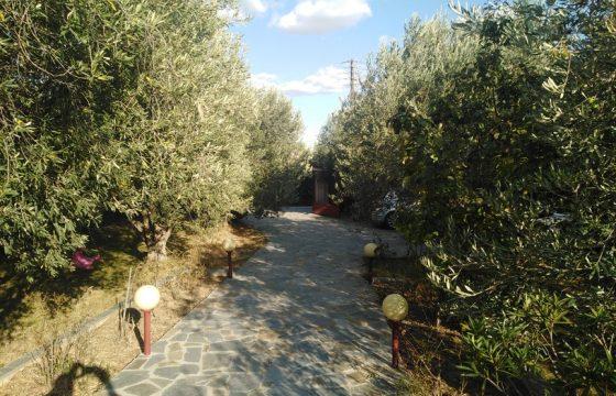 ID 904 Самостоятелна къща с двор в Неа Каликратия, Халкидики